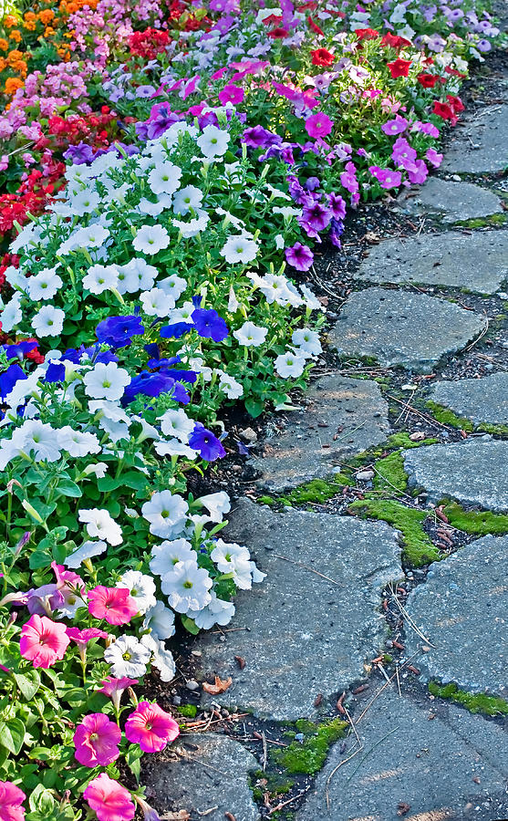 Cobblestone path flowers photograph by valerie garner - Valerie garnering ...