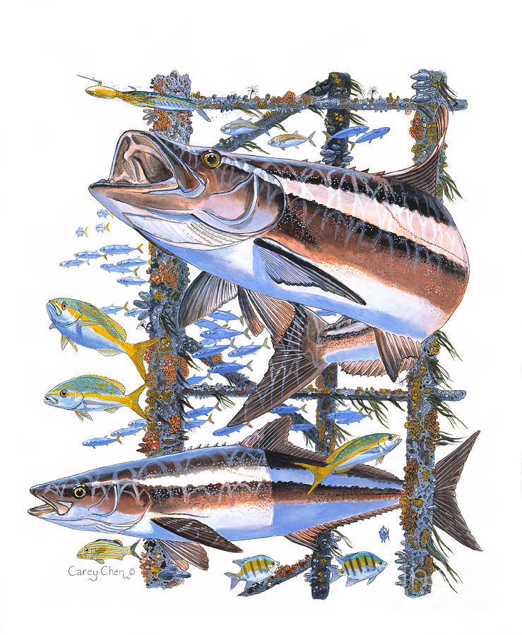 Cobia Painting - Cobia Hangout by Carey Chen