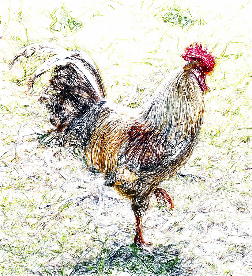 Cock o' the Walk by Sheila Laurens
