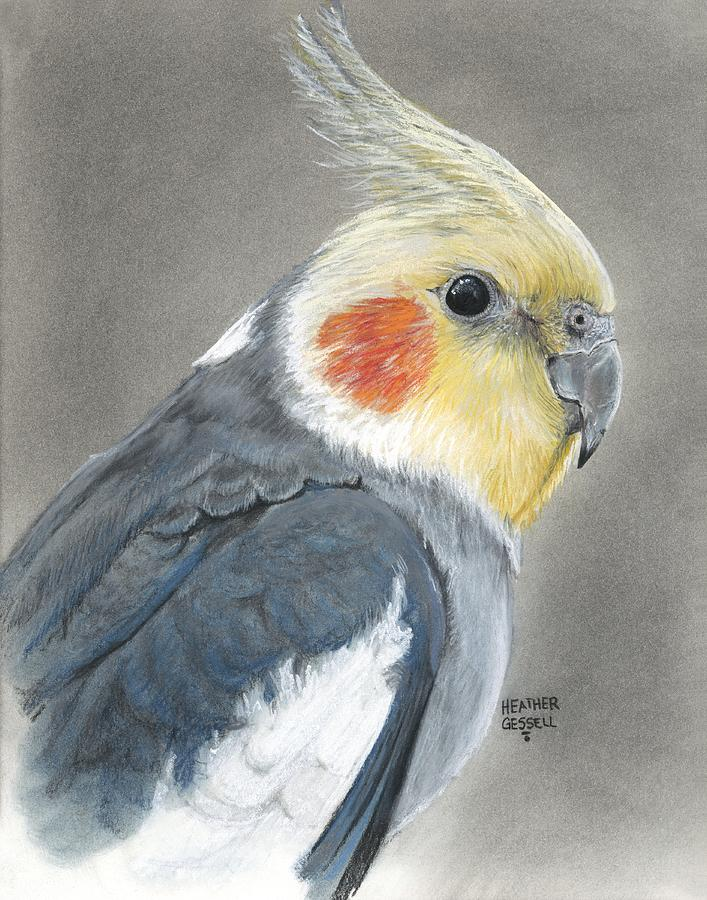 Cockatiel Pastel By Heather Gessell