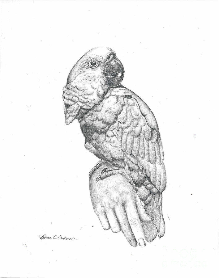 Cockatoo Drawing - Cockatoo Loves by Rebecca Christine Cardenas