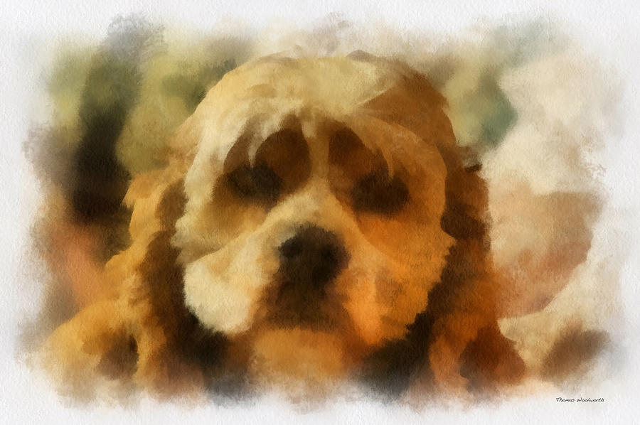 Spaniel Photograph - Cocker Spaniel Photo Art 03 by Thomas Woolworth