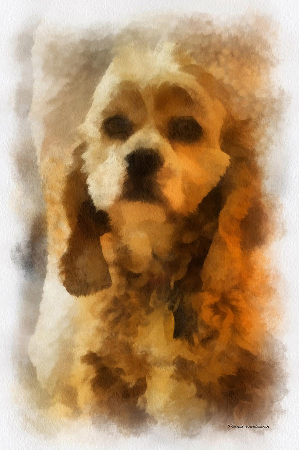 Spaniel Photograph - Cocker Spaniel Photo Art 04 by Thomas Woolworth