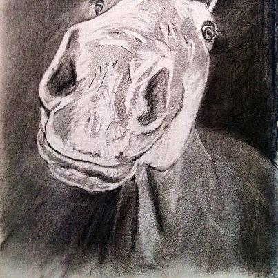 Horse Mixed Media - Coco by Rachel Dubber