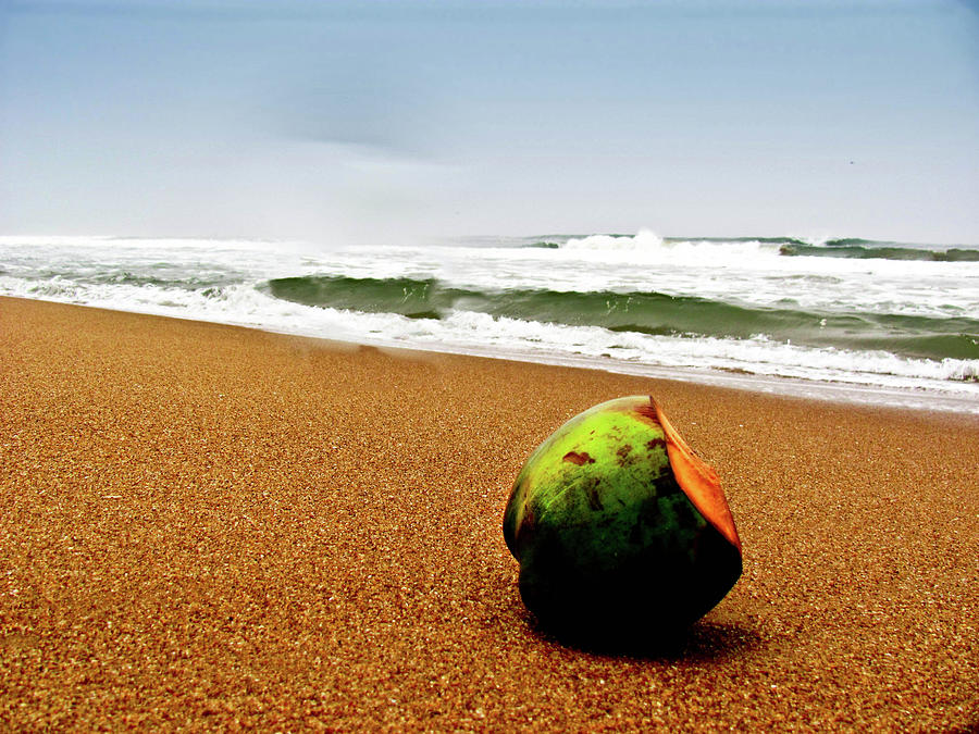 Coconut On Sandy Beach With Waves And Photograph by Amlan Mathur