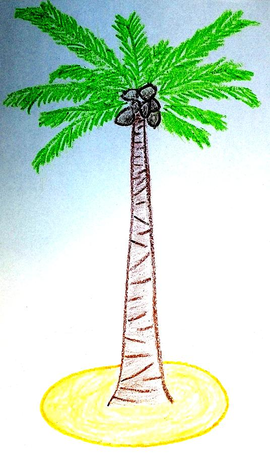 Coconut Tree Drawing by Henrich Horvath