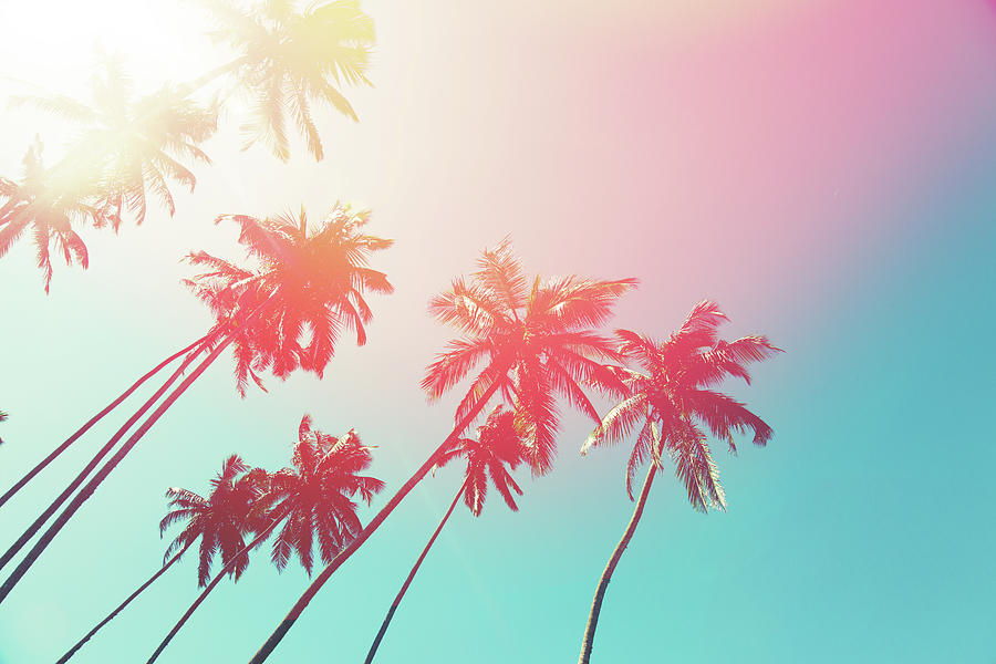 Coconut Trees And Turquoise Indian Ocean Photograph by Danilovi