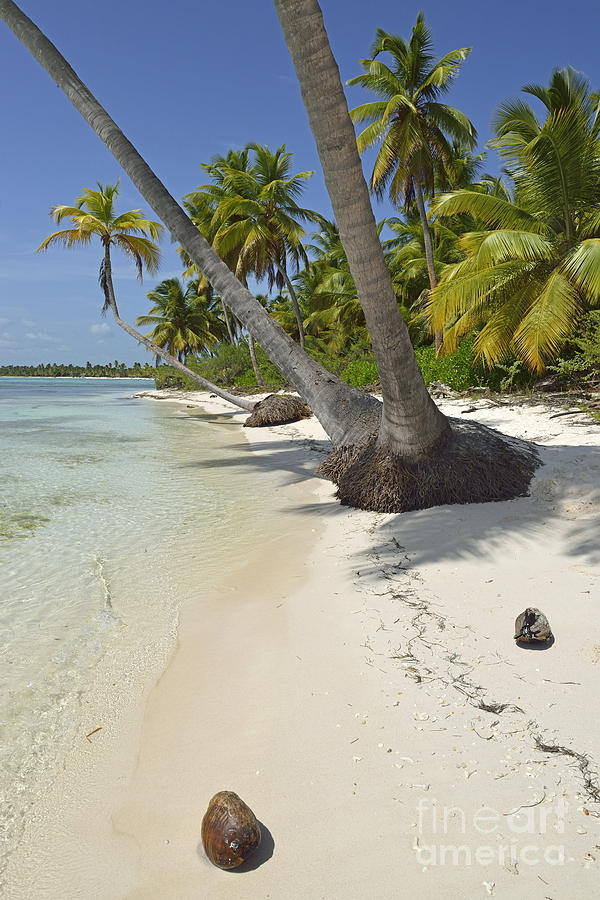 Absence Photograph - Coconuts On Pristine Tropical Beach by Sami Sarkis