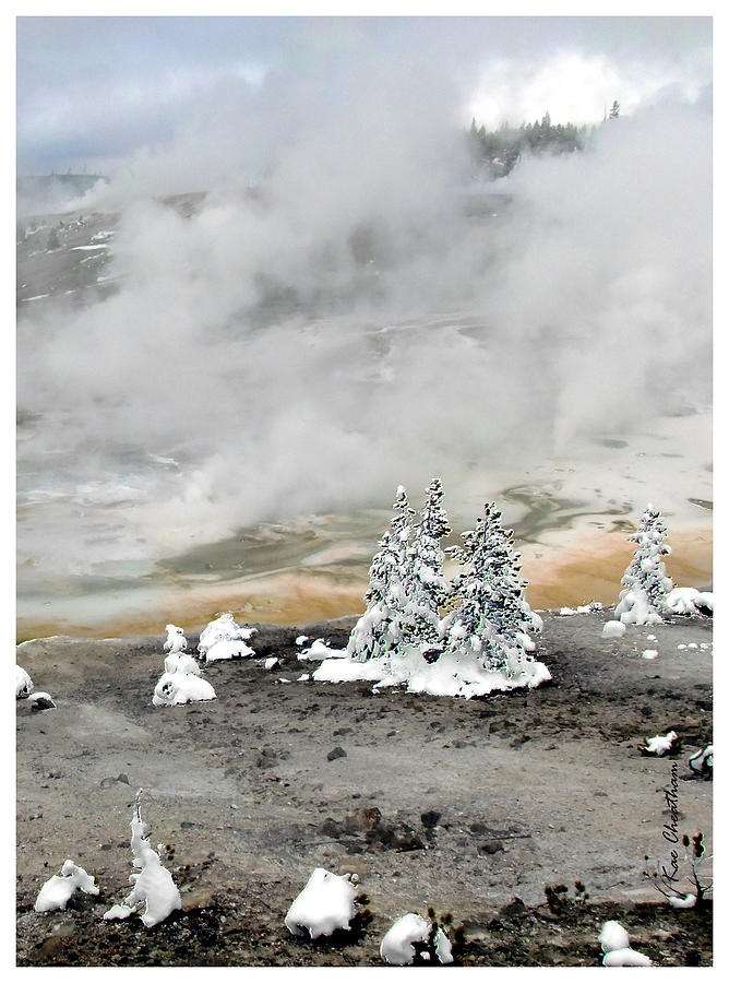 Norris Geyser Basin Photograph - Cold And Hot Trees by Kae Cheatham