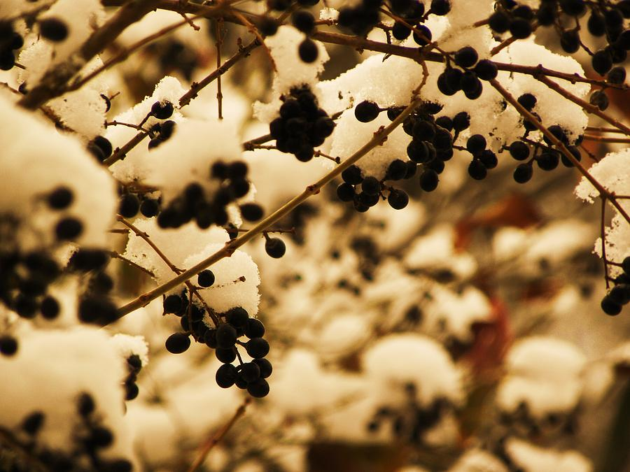 Berries Photograph - Cold Berries by Christian Rooney