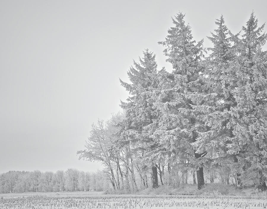 Lace Photograph - Cold Lace by Odd Jeppesen