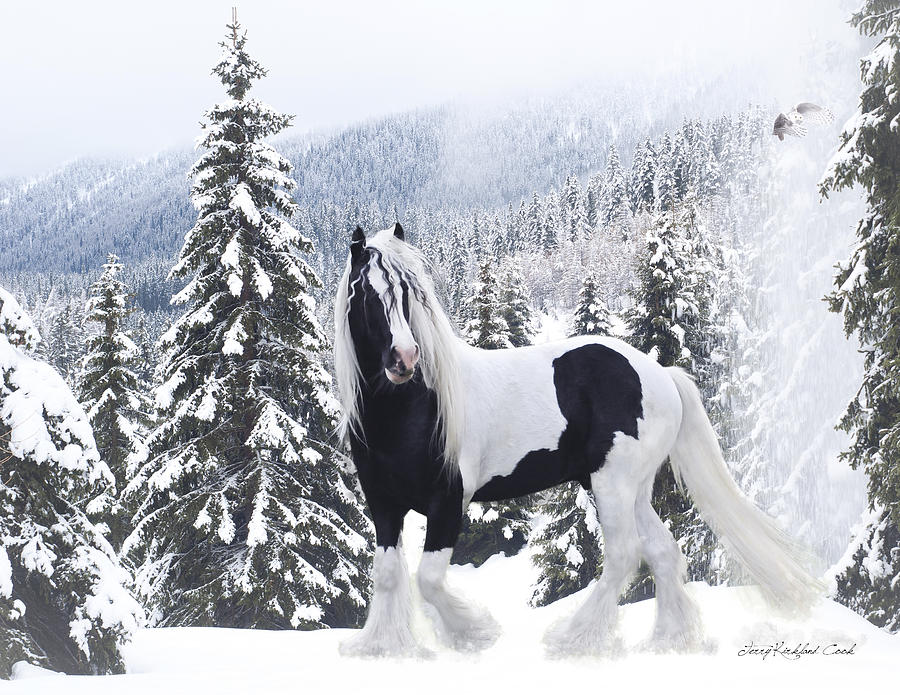 Equine Digital Art - Cold Mountain by Terry Kirkland Cook