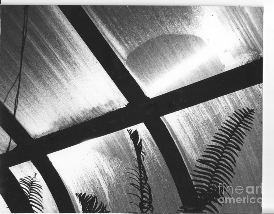 Photo Photograph - Cold Sun by Susan M Fleischer