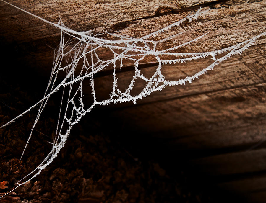 Spider Web Photograph - Cold Web by Odd Jeppesen