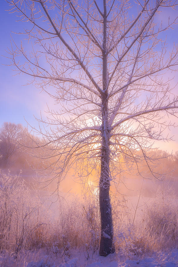 Cold Winter Morning Photograph