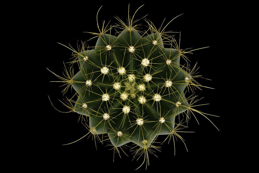 Cactus Photograph - Coleocephalocereus Aureus by Victor Mozqueda