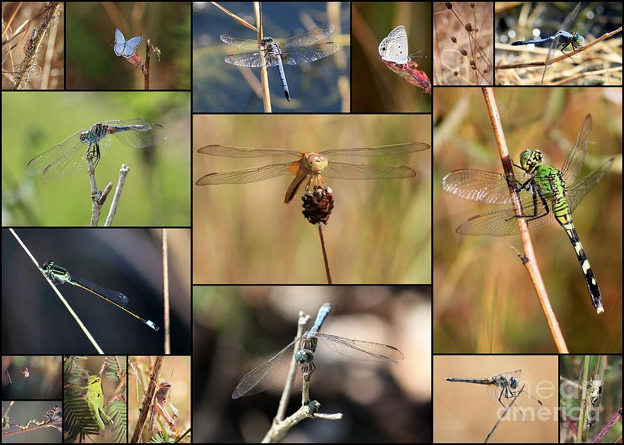 Dragonfly Photograph - Collage Marsh Life by Carol Groenen