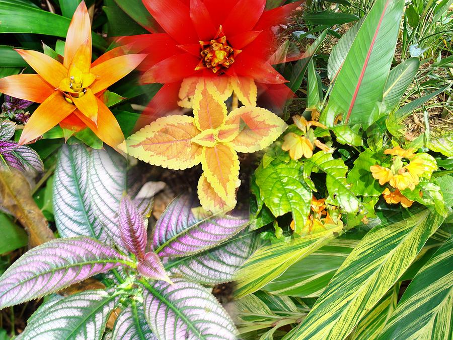 Seminole Photograph - Collage Of Tropical Colors by Van Ness
