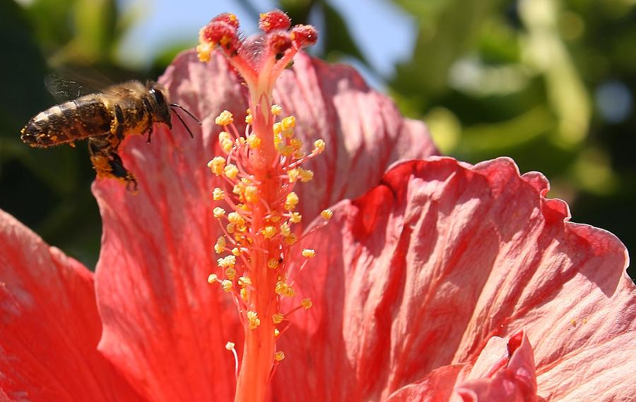 Flower Photograph - Collecting Pollen by Bruce Bley