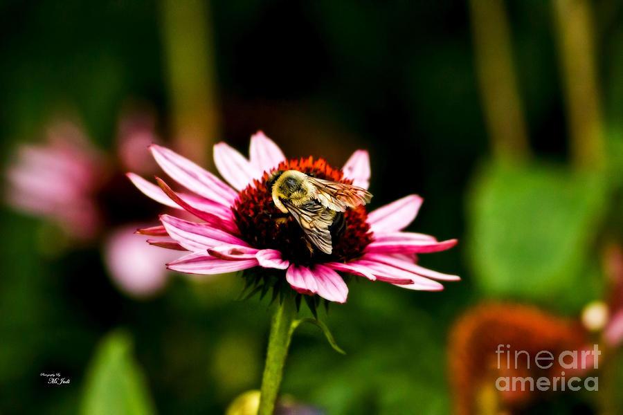 Collecting Pollen Photograph
