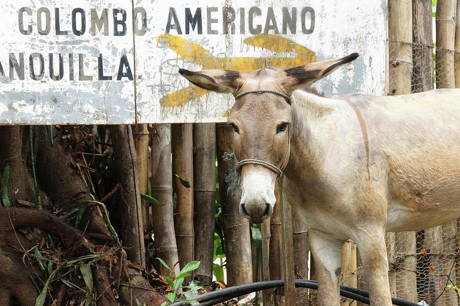 Americano Photograph - Colombia, Minca Mule And Sign by Matt Freedman