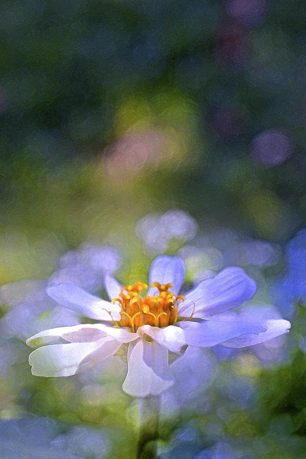 Floral Photograph - Color 121 by Pamela Cooper