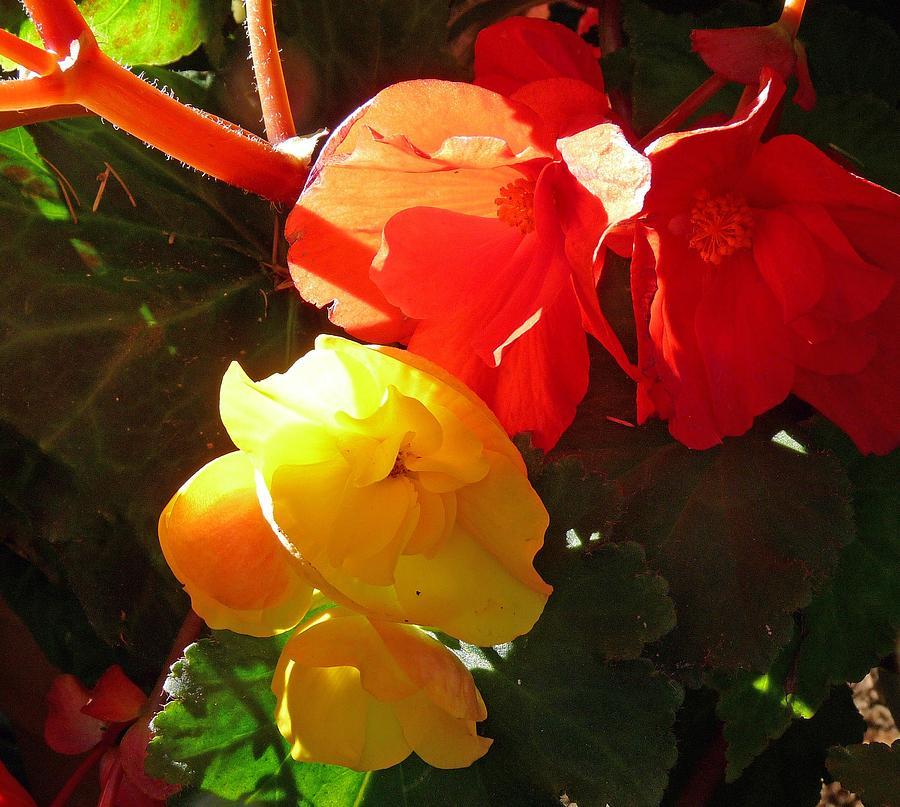 Beautiful Photograph - Color Burst by Gracia  Molloy