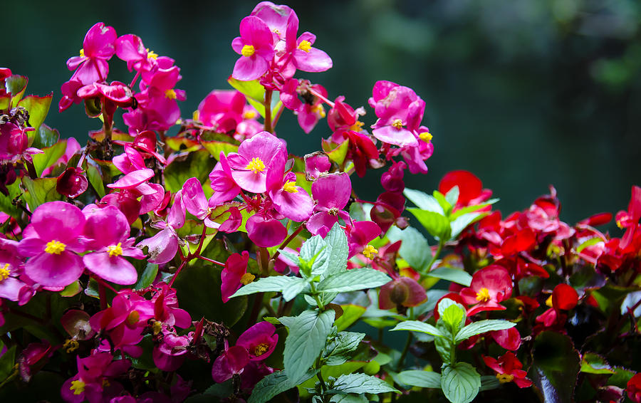 Bloom Photograph - Color Explosion by Sotiris Filippou
