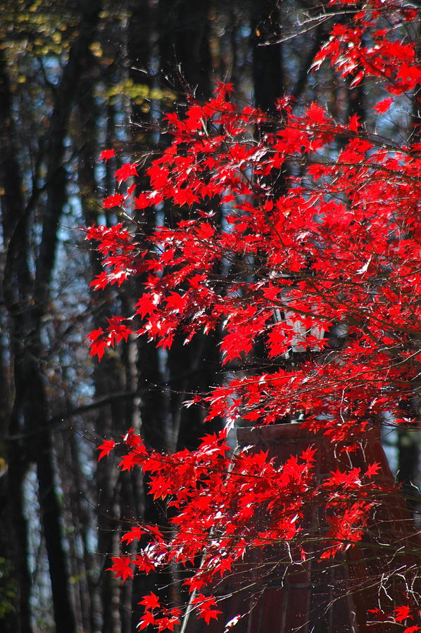 Fall Color Photograph - Color Filled by Les Scarborough