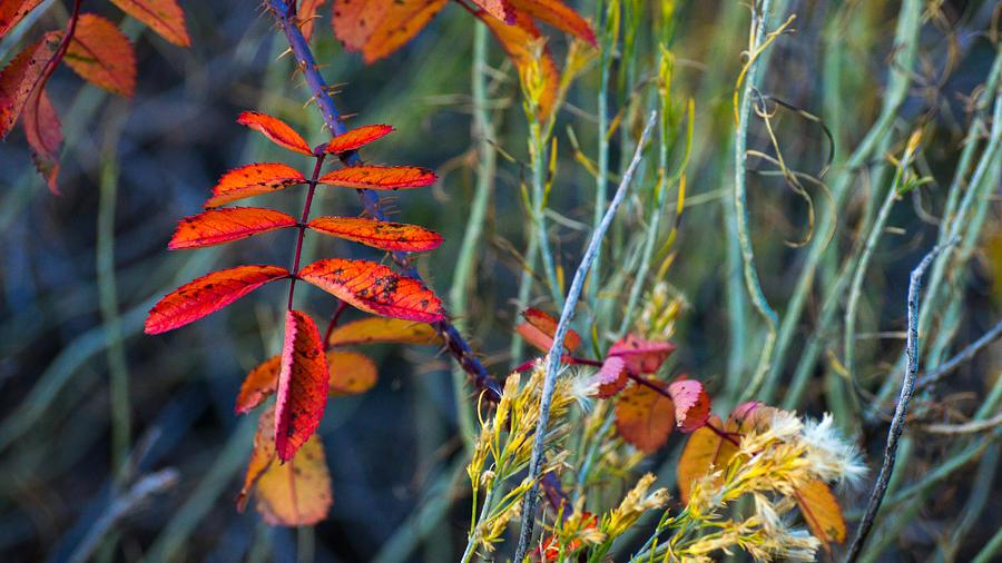 Color Natural Accents Photograph