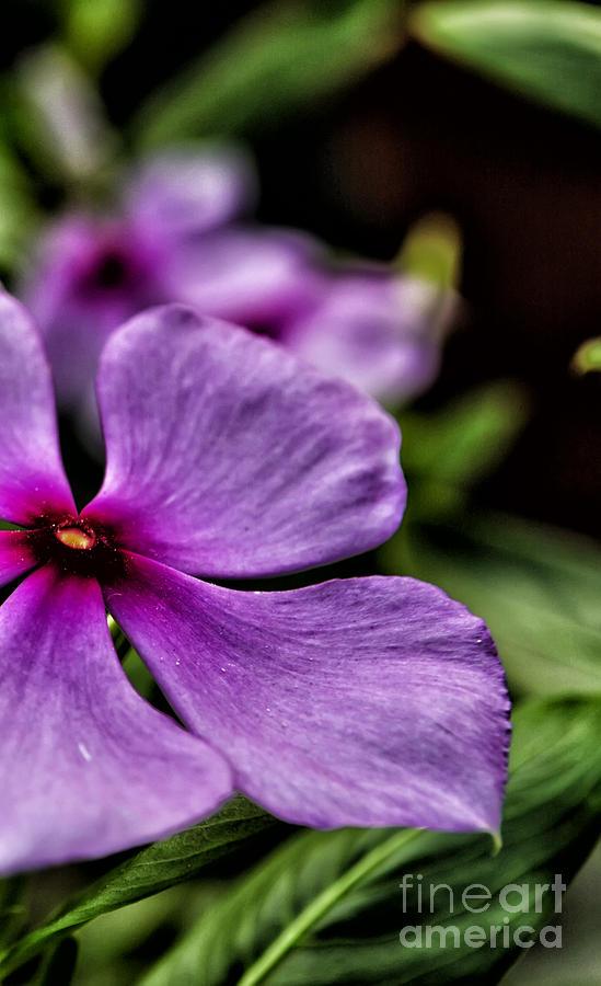 Nature Photograph - Color by Vineesh Edakkara