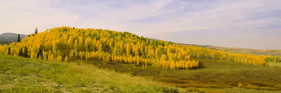 Scenic Photograph - Colorado Aspens by Brian Harig