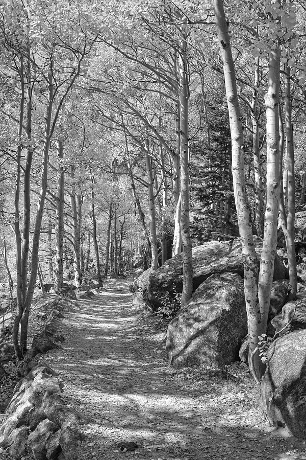 Colorado Black And White Photography - Aspen Leaves Trail In Rmn Photograph
