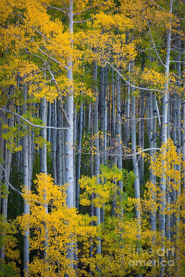 America Photograph - Colorado Fall Color by Inge Johnsson