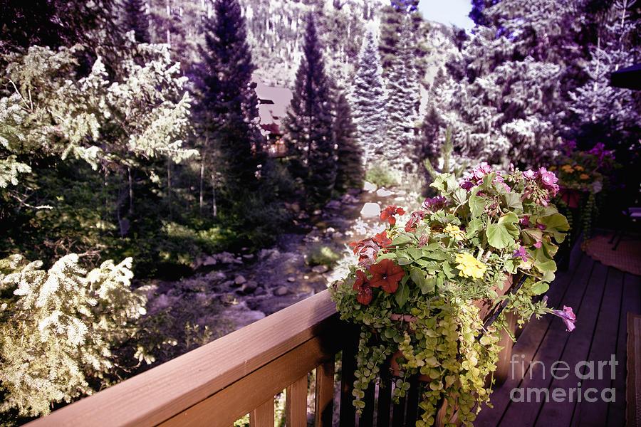 Vail Photograph - Colorado Landscape by Madeline Ellis