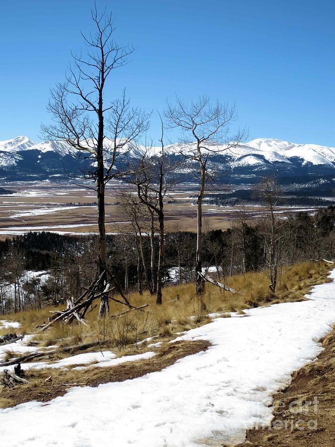 Nature Photograph - Colorado Trail 1 by Claudette Bujold-Poirier