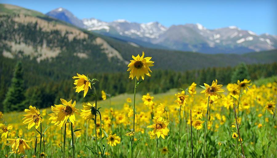 Colorado Photograph - Colorado Wildflowers by Danielle Marie