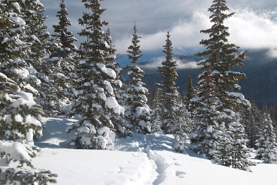 Colorado Winter Morning Forest With Rising Clouds Photograph