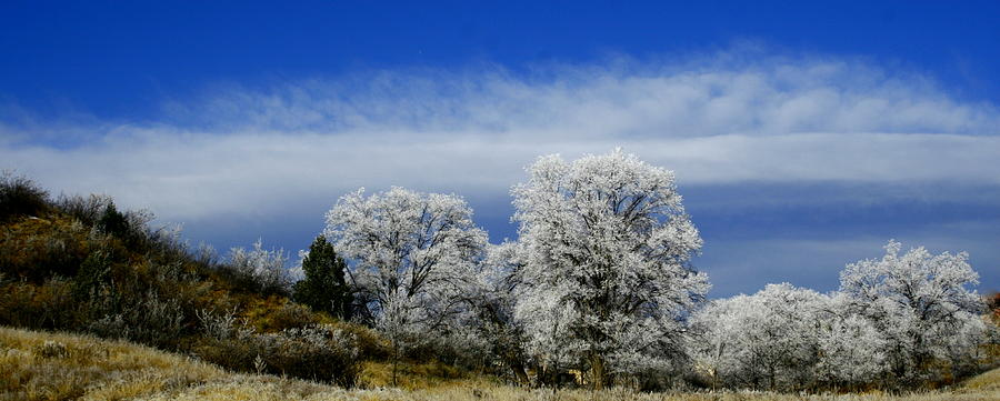 Winter Photograph - Colorados First Day Of Winter by Alexandra  Rampolla