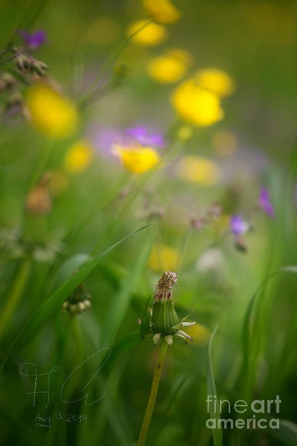 Nature  Photograph - Colorano Di Vento. by  Andrzej Goszcz