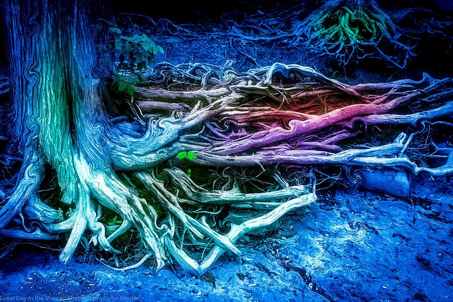 Trees Photograph - Colored Forest by John Ressler