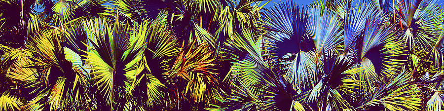 Palm Trees Photograph - Colored Palms by Michael Guirguis