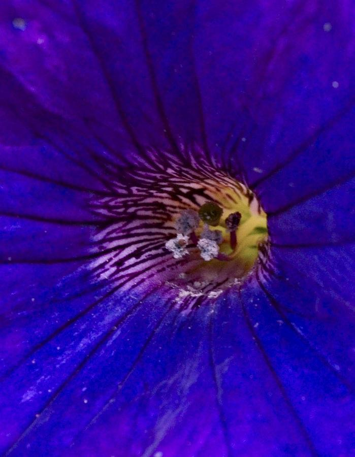 Flower Photograph - Colorful Attraction by Michael Sokalski