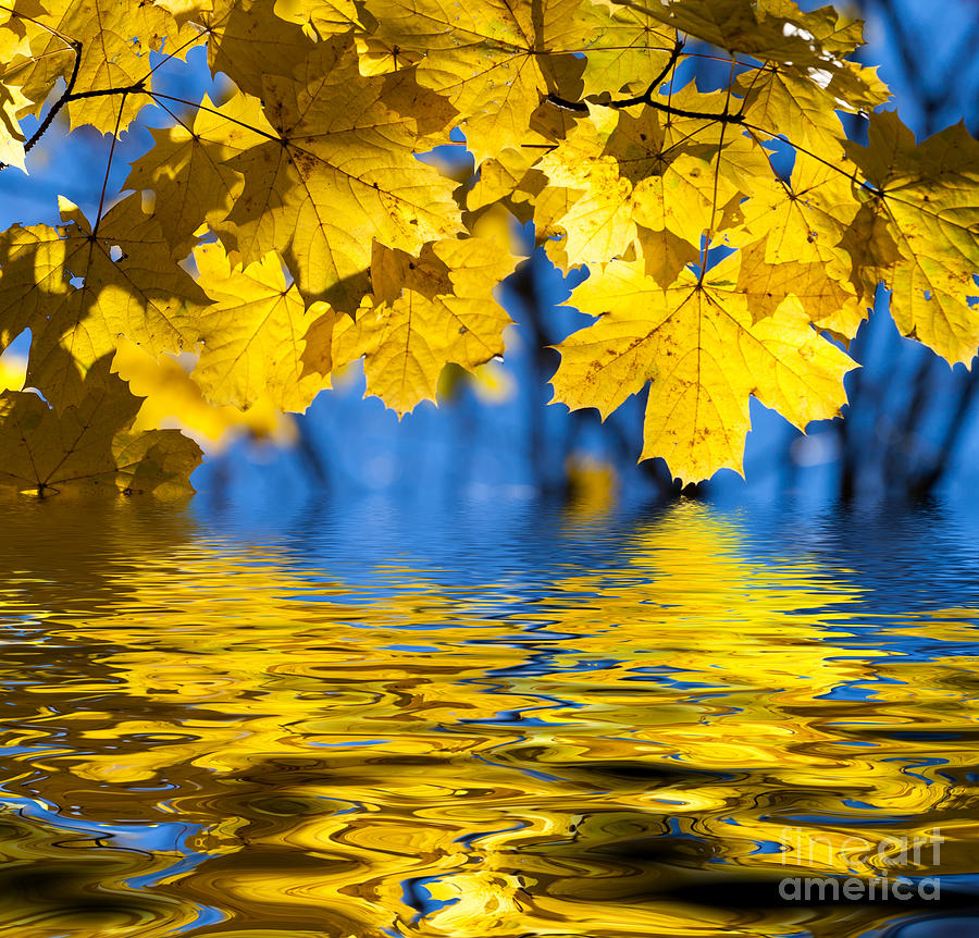 Colorful Photograph - Colorful Autumn Leaves by Boon Mee