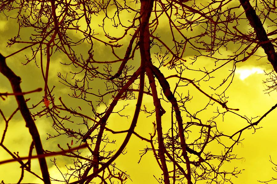 Color Photograph - Colorful Branches by Michael Sokalski
