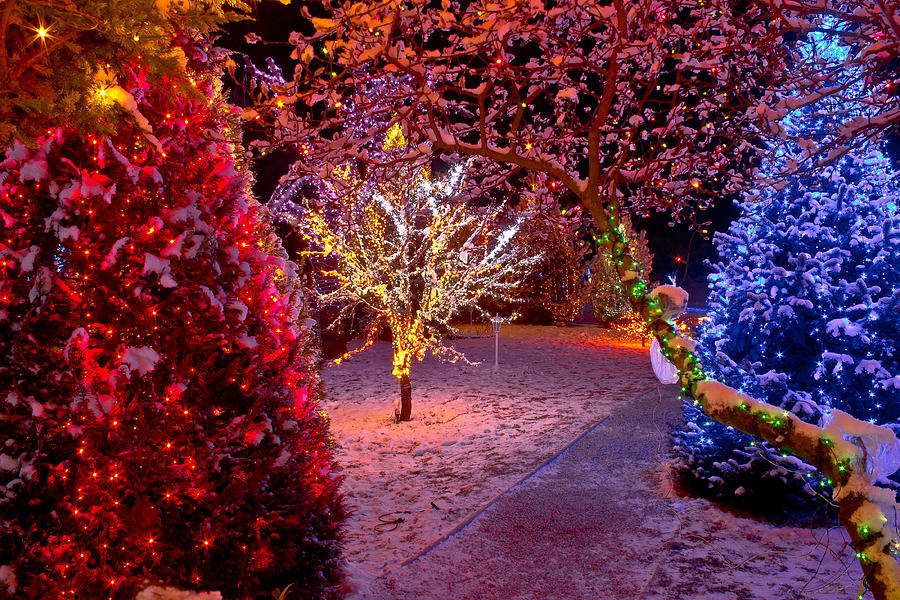 Christmas Photograph - Colorful Christmas Lights On Trees by Brch Photography