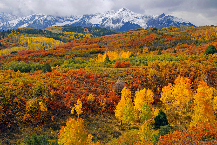 Autumn Photograph - Colorful Colorado At Its Best   by John Hoffman