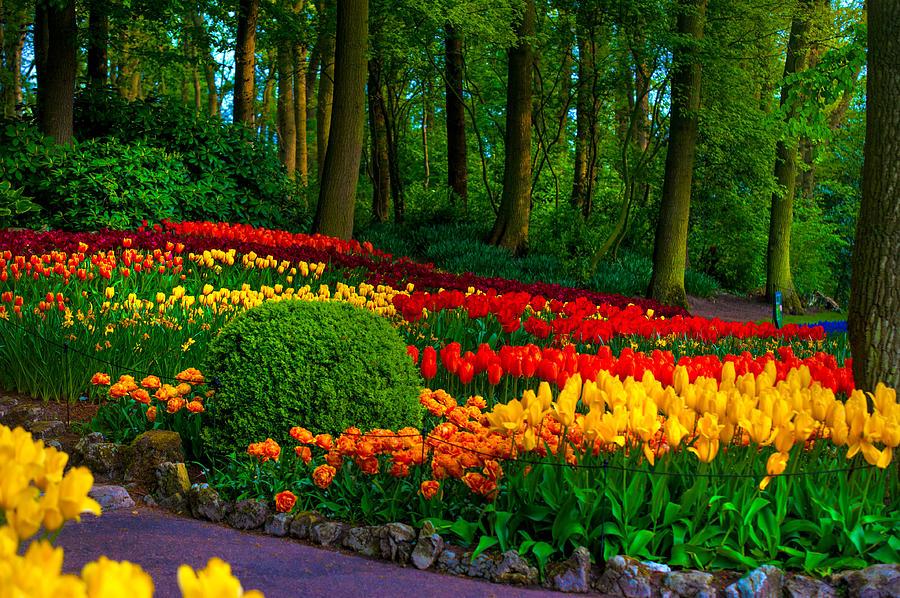 Jenny Rainbow Photograph - Colorful Corner Of The Keukenhof Garden 4. Tulips Display. Netherlands by Jenny Rainbow