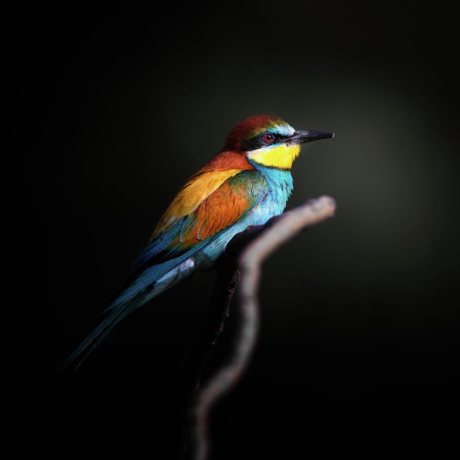 Animal Photograph - Colorful Darkly by Fegari