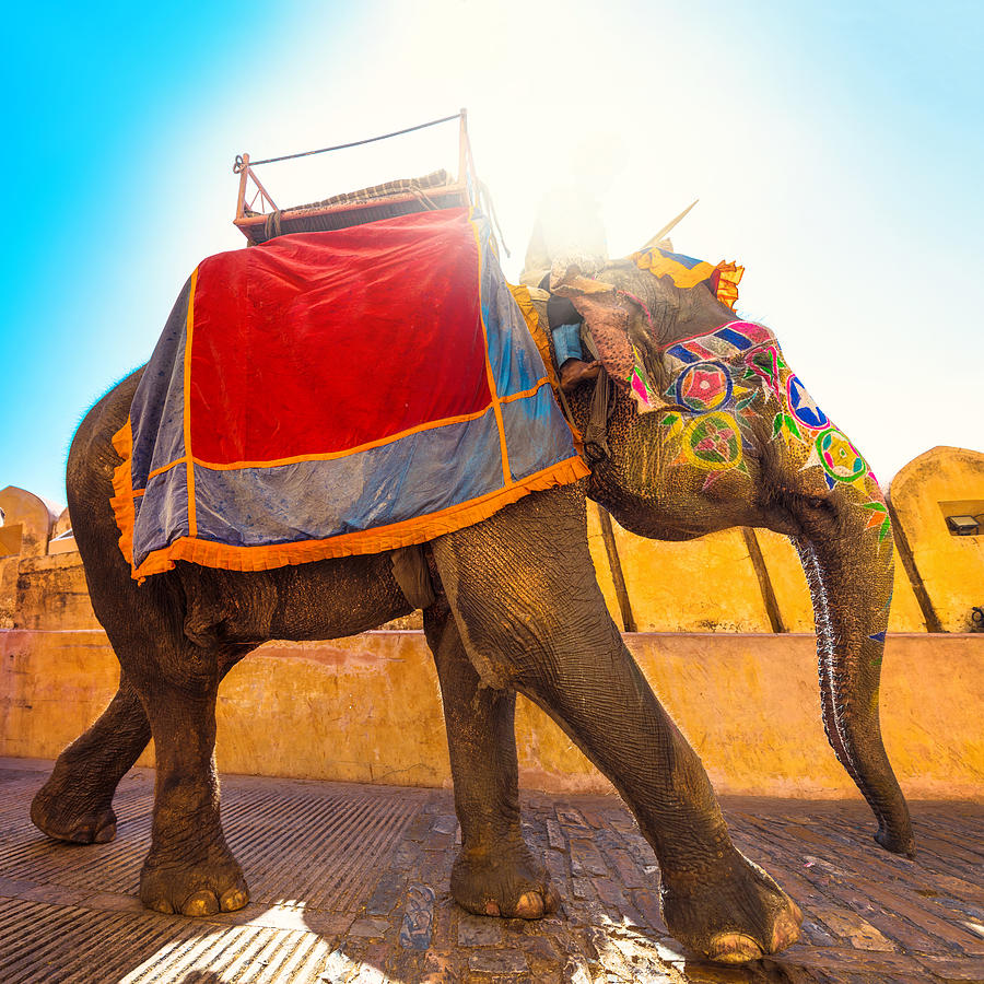colorful Elephant in India Photograph by Nikada